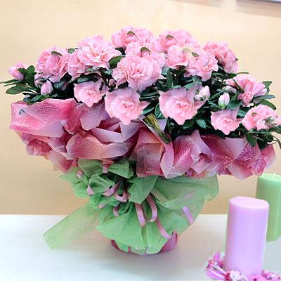 Profumo di fiori e colore per la Festa della Mamma